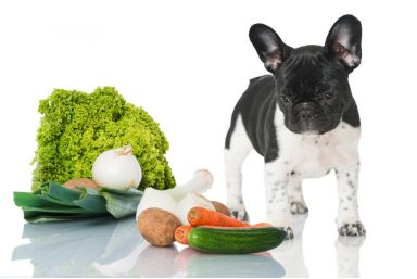 Start: Animal Nutrition and Natural Health  For Your Pet